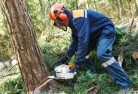 Aberfoyle Park Tree felling services 21